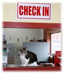 SPOT Check-In