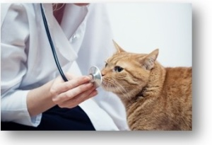 ID-100133979-Cat & Vet Image courtesy of lemonade FreeDigitalPhotos.net