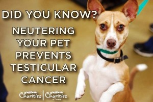 neutering prevents cancer